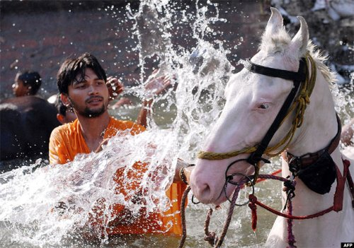 An Indian man cools off his horse during a bath in a canal in Jalandhar