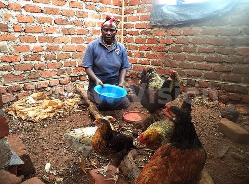 Nyirabakonze feeding the chicken with grain.